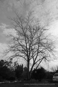 black adn white tree